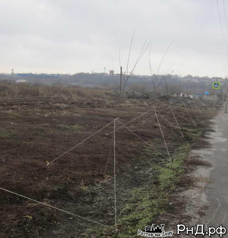 Новая аллея на муниципальной территории вдоль ул. Вавилова по дороге на Суворовский